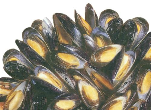 """FareShare: Mussel Information from """"Coastal Living"""" Magazine"""