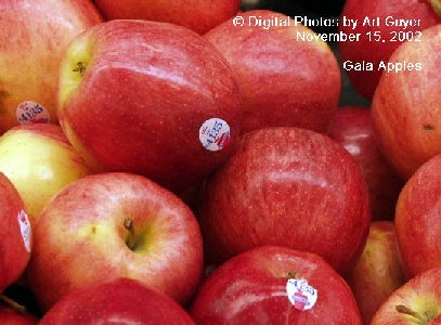 Gala Apples in the Market Place